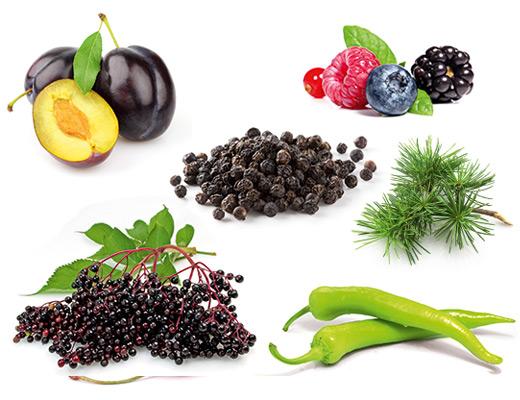 Die typischen Aromen der Rebsorte Cabernet-Sauvignon, Cassis, gruene Peperoni, Zedernholz und Pflaume.